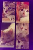 kitten4-front